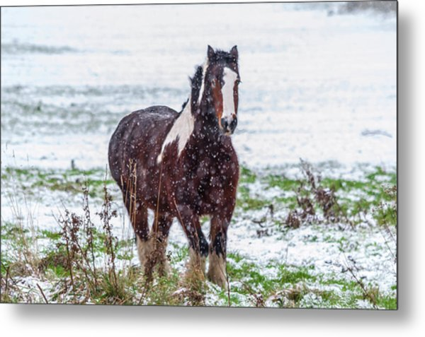 Brown Horse Galloping Through The Snow Metal Print