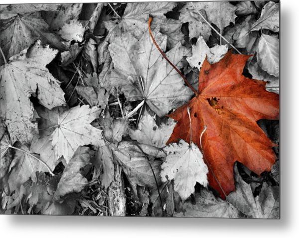 Brown Maple Leaf Metal Print