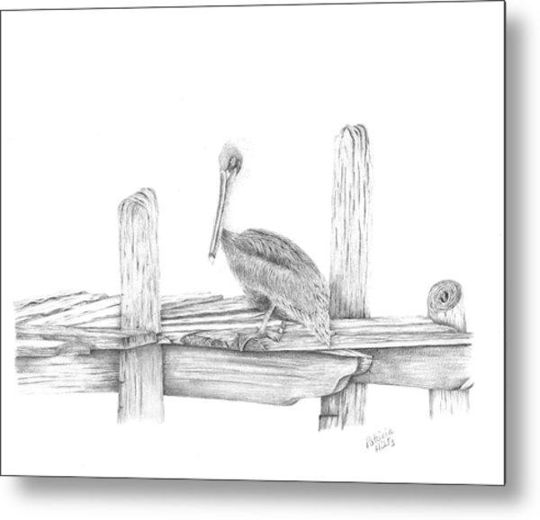 Brown Pelican Metal Print