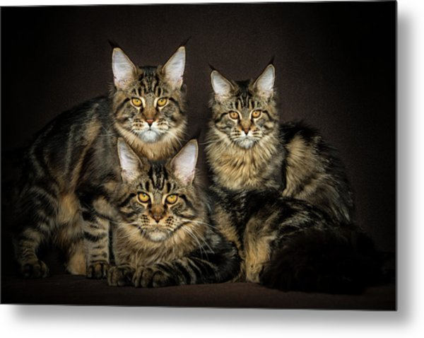 Brown Siblings Metal Print
