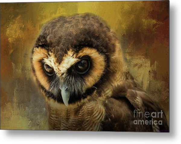 Brown Wood Owl Metal Print