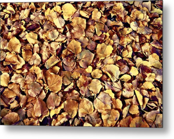 Browning Leaves Metal Print