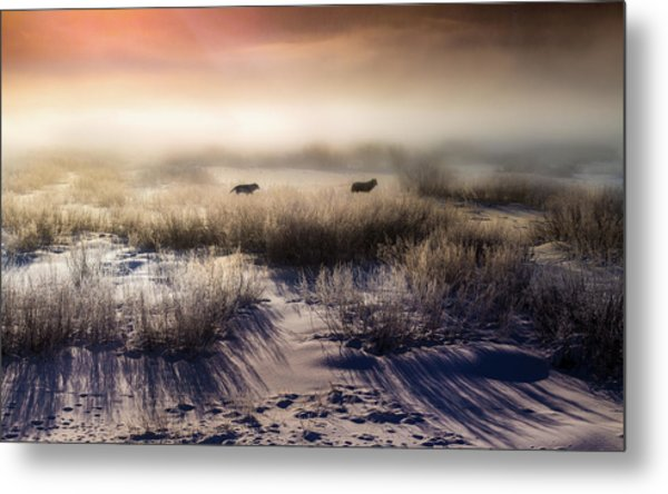 Metal Print featuring the photograph Brumous Willow Bed // Greater Yellowstone Ecosystem by Nicholas Parker