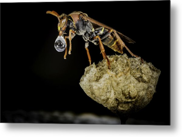 Bubble Blowing Wasp Metal Print
