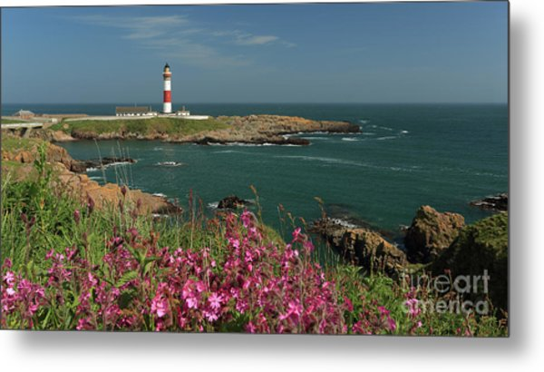 Buchan Ness Lighthouse And Spring Flowers Metal Print