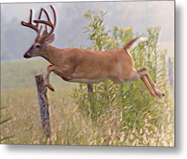 Buck Jumping Fence Metal Print by Steve Carpenter