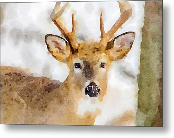 Buck Profile Metal Print