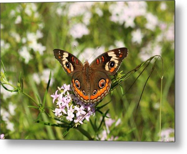 Buckeye Butterfly Posing Metal Print
