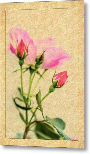 Buds And Bloom - Rose Floral Metal Print by Barry Jones