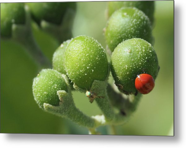 Buds And Bugs Metal Print