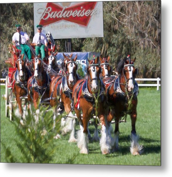 Budweiser Clydesdales Perfection Metal Print