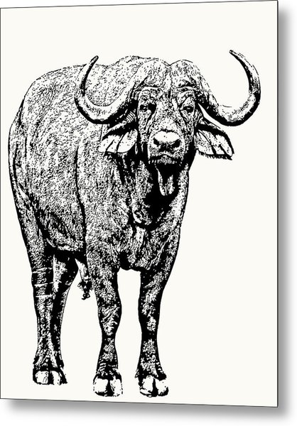 Buffalo Bull, Full Figure Metal Print