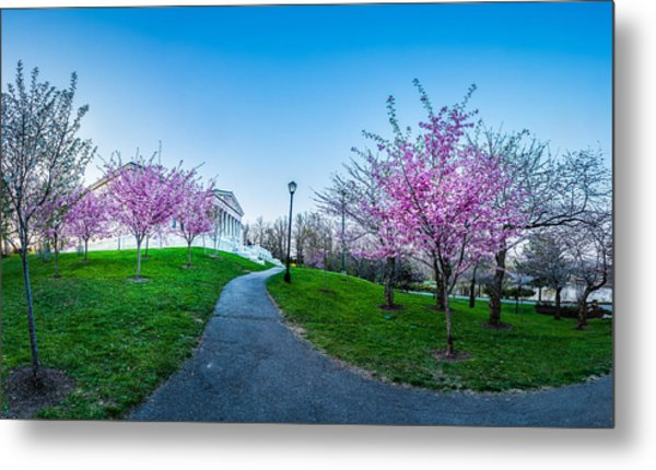 Buffalo Cherry Blossoms 1 Metal Print