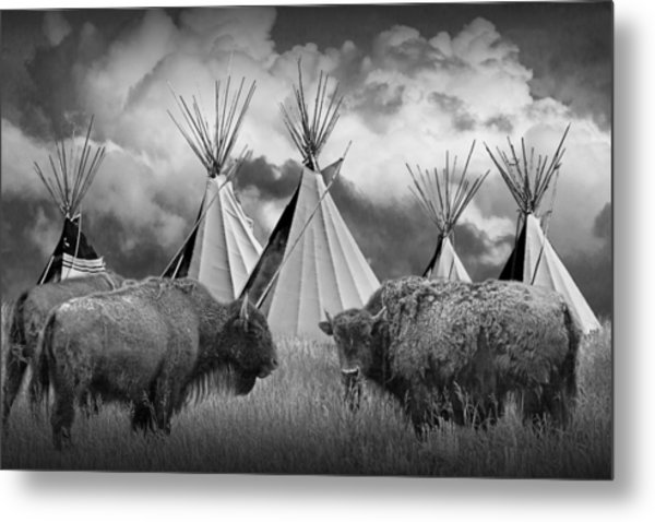 Buffalo Herd Among Teepees Of The Blackfoot Tribe Metal Print