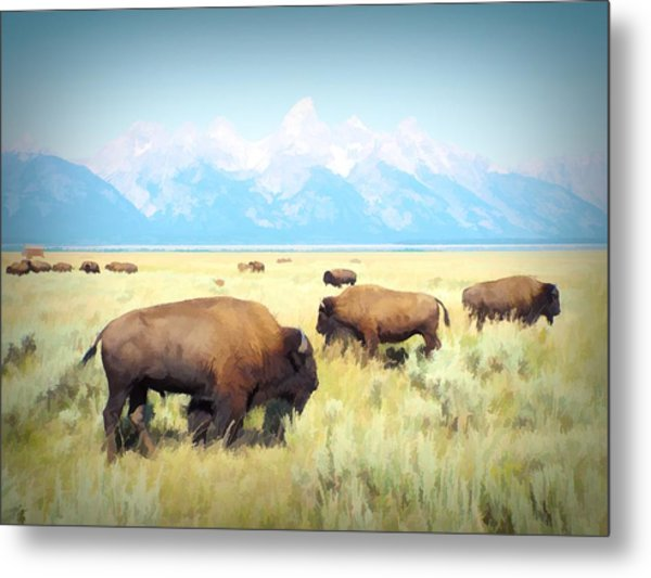 Buffalo Roam, Smokey Grand Tetons, Wyoming Metal Print