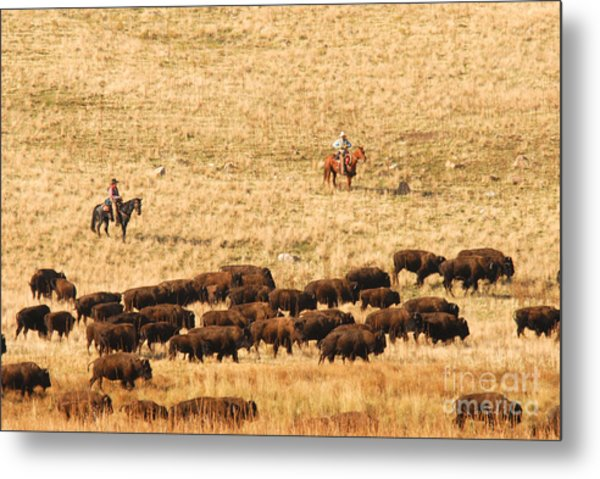 Buffalo Roundup Metal Print by Dennis Hammer
