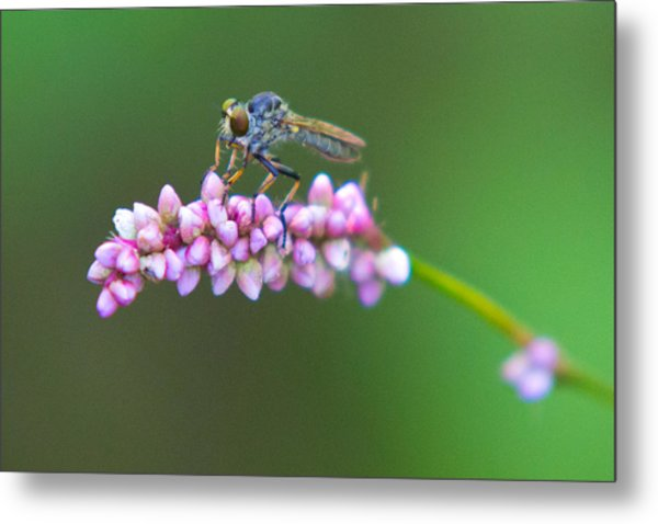 Bug Eyed Metal Print