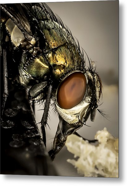 Bug On A Bug Metal Print