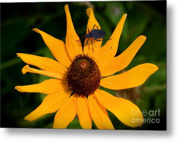 Bug On A Flower Metal Print by Sherri Williams