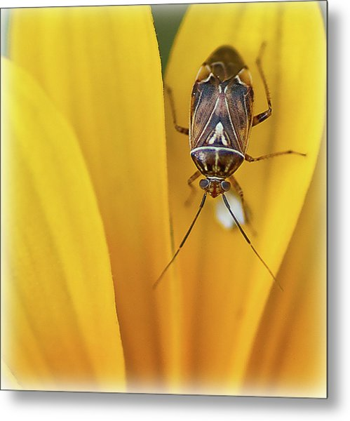 Metal Print featuring the photograph Bug On Flower by Rick Hartigan