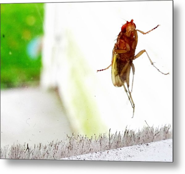 Bug On Window Metal Print