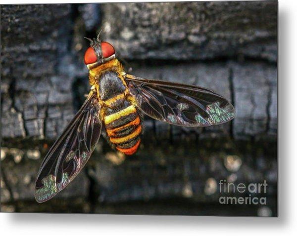 Bug With Red Eyes Metal Print