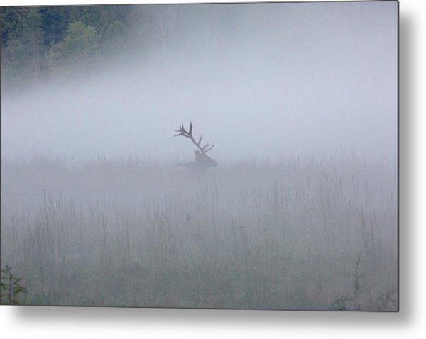 Bull Elk In Fog - September 30, 2016 Metal Print