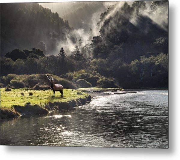 Bull Elk In Wilderness Metal Print