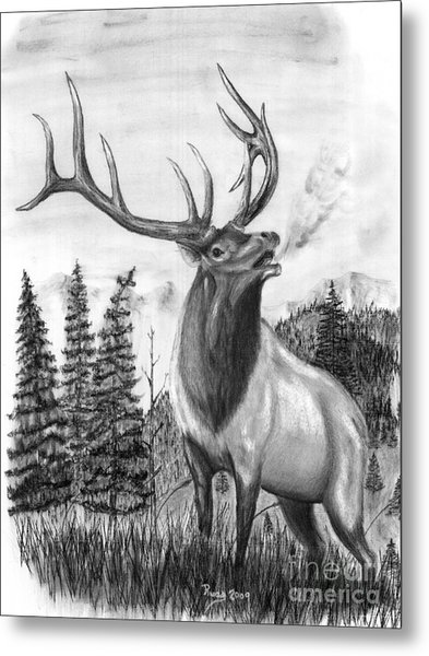 Bull Elk Issuing Challenge Metal Print by Russ  Smith