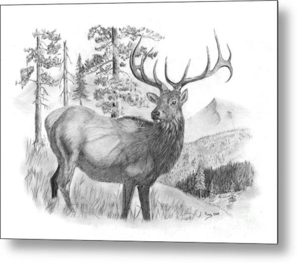 Bull Elk Metal Print by Russ  Smith