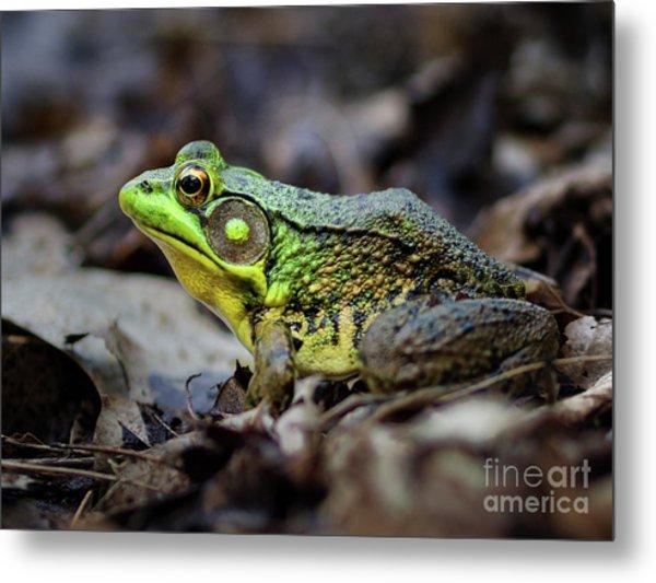 Bull Frog Metal Print