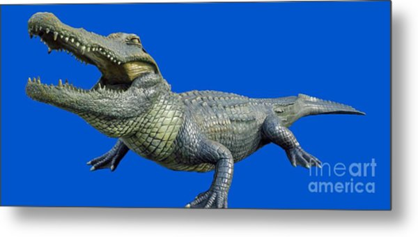 Bull Gator Transparent For T Shirts Metal Print