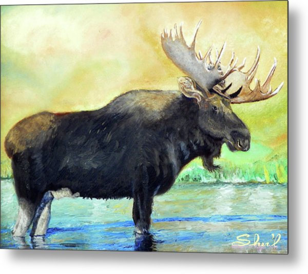 Bull Moose In Mid Stream Metal Print