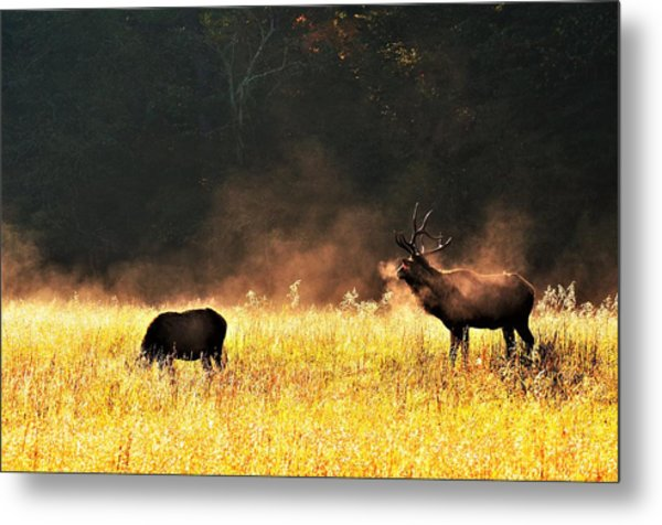 Bull With His Girl Metal Print