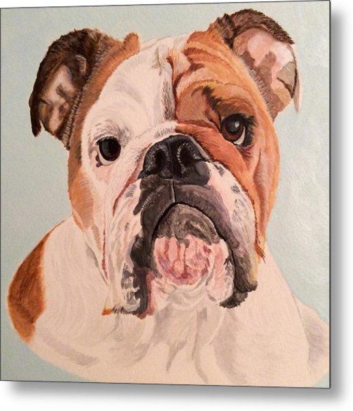 Bulldog Beauty Metal Print