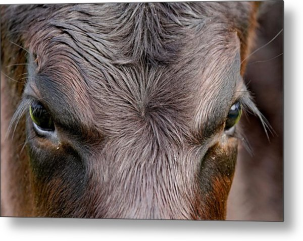 Bull's Eye Metal Print