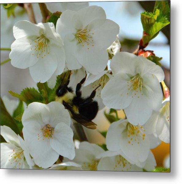 Bumble Bee In Hiding Metal Print