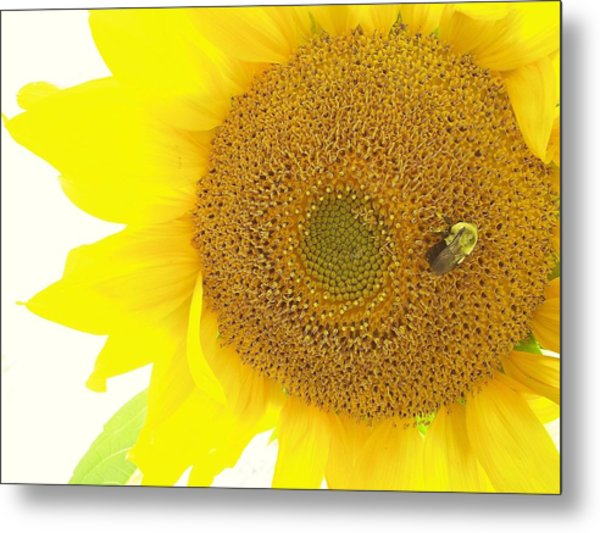 Bumble Bee Sunflower Metal Print