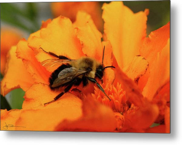 Bumble Orange Metal Print