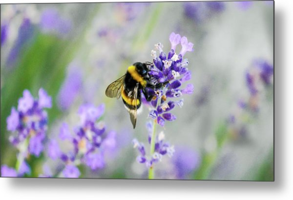 Metal Print featuring the photograph Bumblebee by Bee-Bee Deigner