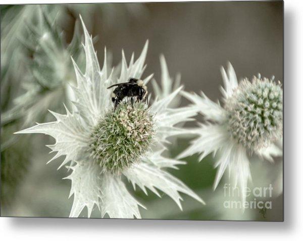 Bumblebee On Thistle Flower Metal Print