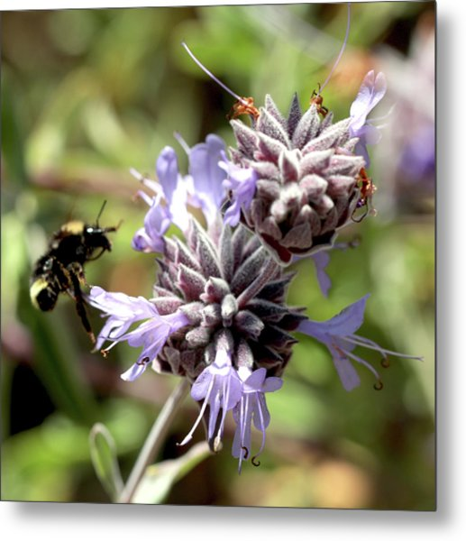 Bumbling Into Flower Metal Print by Michael Riley