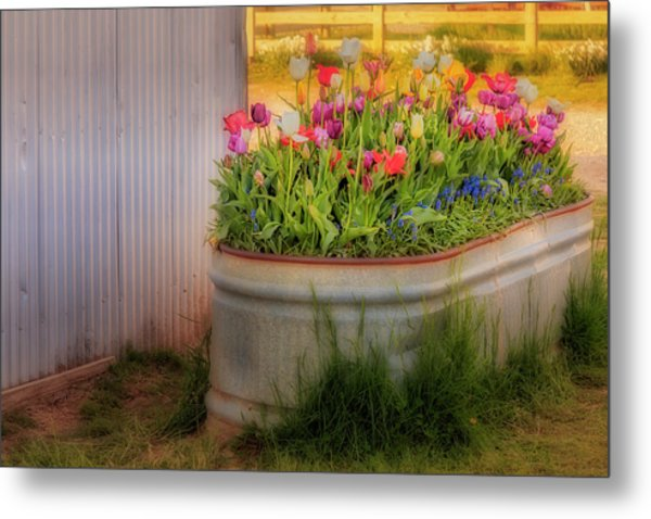 Metal Print featuring the photograph Bunch Of Tulips by Susan Candelario