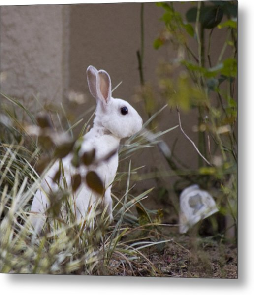 Bunny In The Garden Metal Print by Anthony Towers