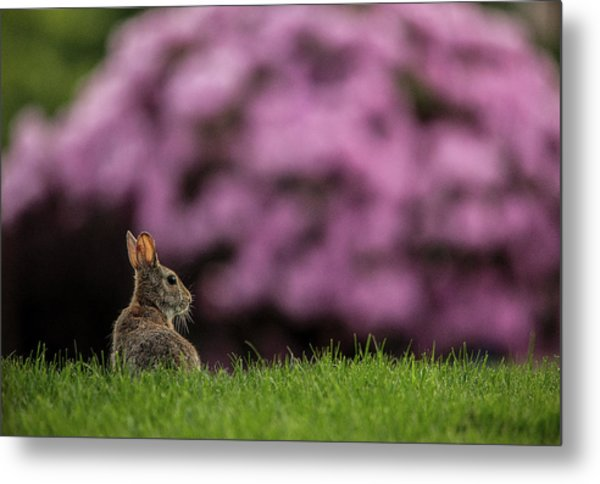 Bunny In The Yard Metal Print
