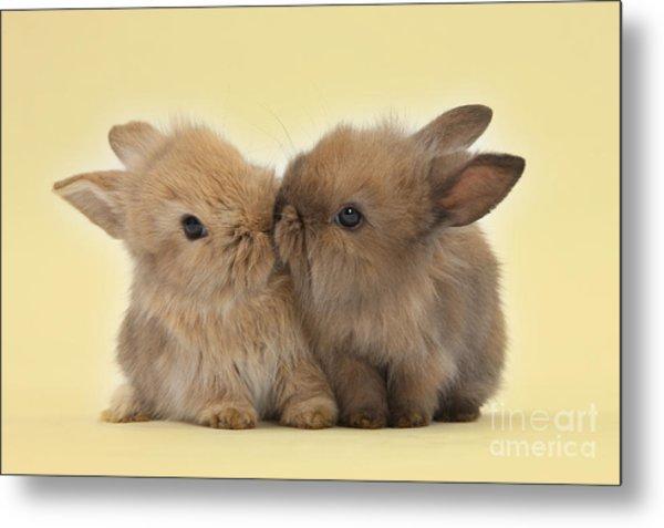 Bunny Kisses Metal Print