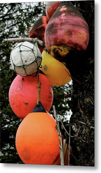 Metal Print featuring the photograph Buoy Decorated Tree by Brandy Little