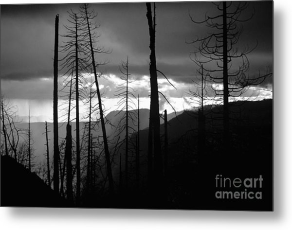 Burnt Forest - Yosemite Metal Print