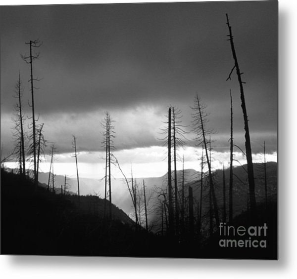 Burnt Forest II - Yosemite Metal Print