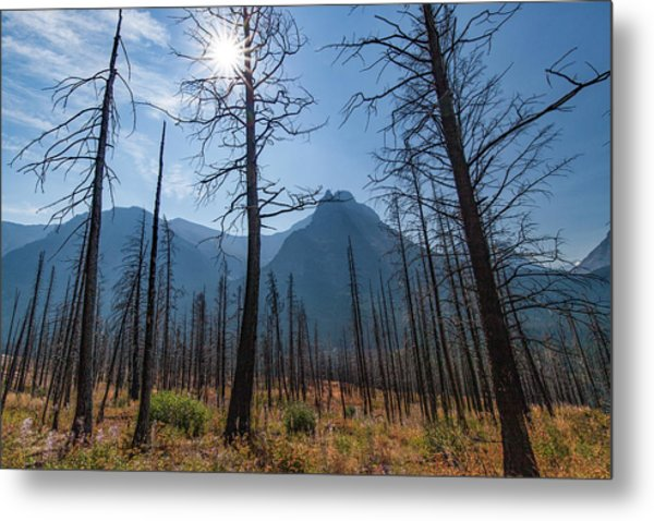 Metal Print featuring the photograph Burnt Offerings by Lon Dittrick